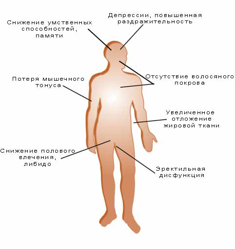 Тестостерон влияние на организм