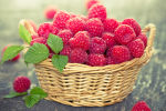 How does raspberry affect blood pressure - increases or decreases?
